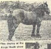 A dark mare prepared for show, taken in Cotteridge Park. Picture from Birmingham Post & Mail